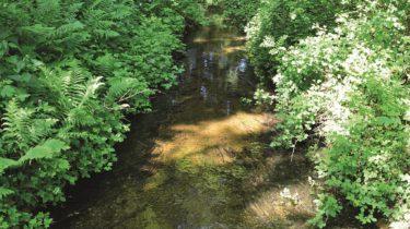 Komende jaren 1700 ha extra bos in Flevoland